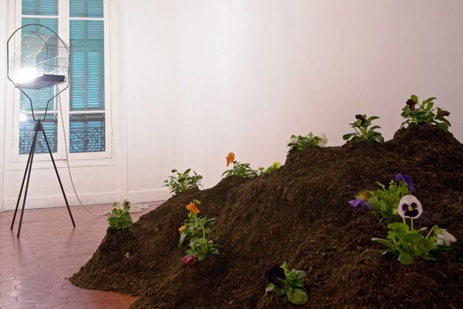 Alexandra Guillot, Le jardin à l'intérieur, 2009. Terreau, pensées, cage à oiseau, lumière.  © la Maison, galerie singulière. Photo : Nicolas Caluaud.